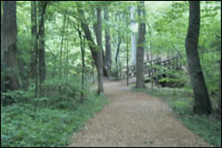 guilford-courthouse-hiking-trail-nc
