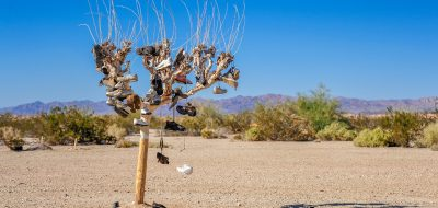 Shoes in a tree in the middle of the Sonoran Desert