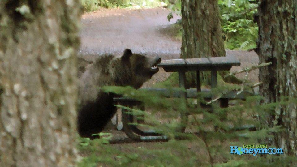 What Kind Of Gun To Shoot Bears Good Sam Camping Blog