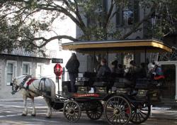 """A great way to see and learn about Historic Charleston.  This wasn't our carriage, but I couldn't get a good """"selfie"""" from the backseat of ours."""