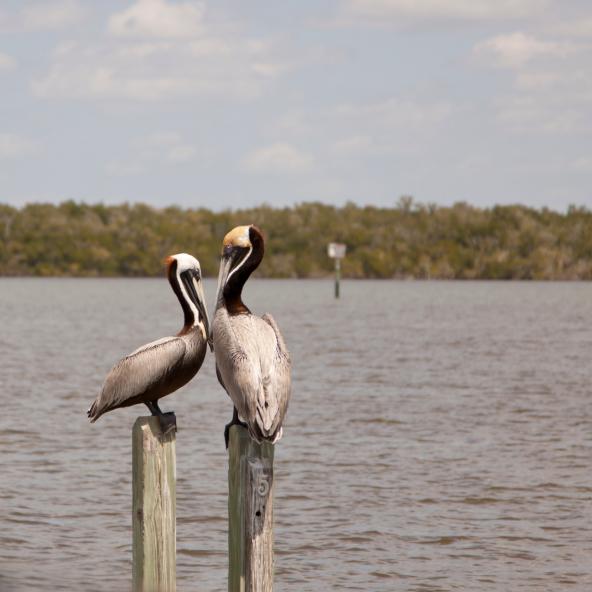Chokoloskee Florida S Ultimate Island Escape Good Sam