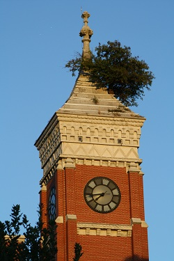 Decatur County Courthouse With Historic Tower Tree