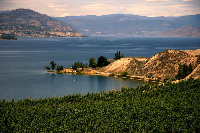 Okanagan Lake near Penticton with vineyards in the foreground © Rex Vogel, all rights reserved