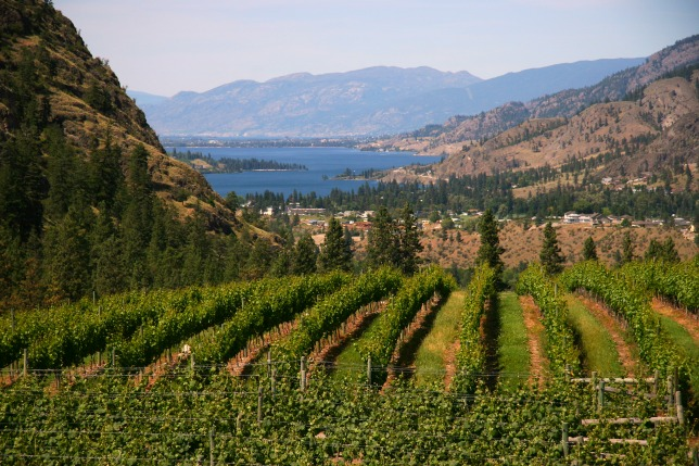 Overlooking See Ya Later Ranch Vineyard and Skaha Lake in the southern Okanagan. Okanagan Lake near Penticton with vineyards in the foreground © Rex Vogel, all rights reserved