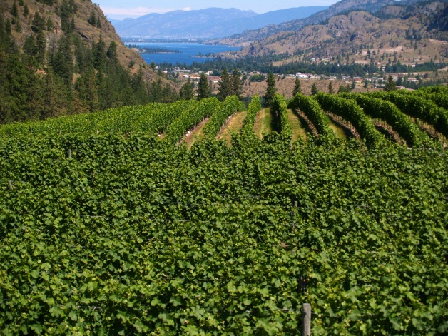 The orchards remain, but today, vineyards climb the arid hillsides. © Rex Vogel, all rights reserved