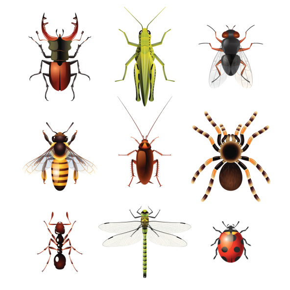 RV insect control – keep bugs, insects from living in your RV