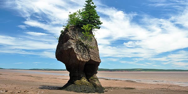 A flower pot rock formation on the coast.