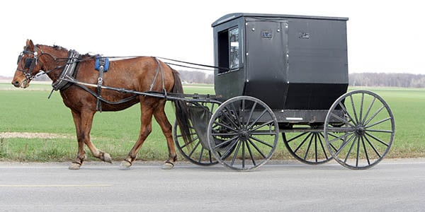 A black Amish buggy pulled by a single horse.