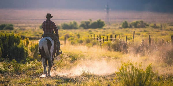 A lone cowboy rides a dusty range alongside a wire fence.