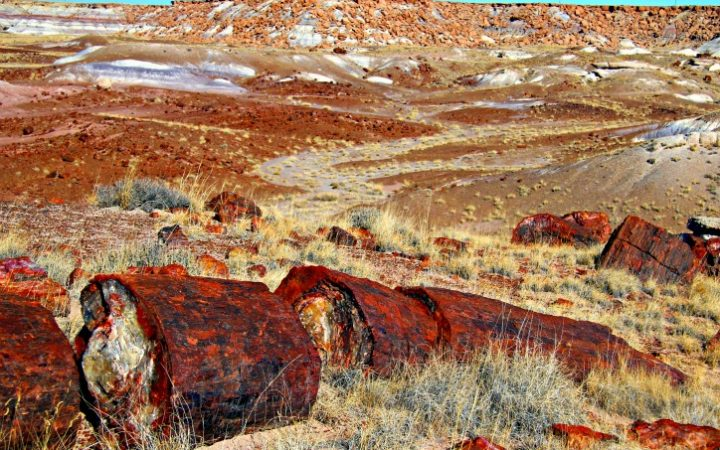 After entering Petrified Forest National Park from the south we hiked the Giant Logs trail located behind Rainbow Forest Museum. © Rex Vogel, all rights reserved