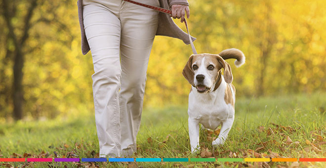 Recommended Rv Parks For Pets Good Sam Camping Blog