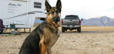 full-time RVing with pets