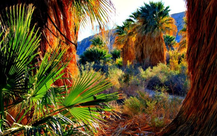 Coachella Valley Preserve is a beautiful attraction especially if you like to hike. © Rex Vogel, all rights reserved