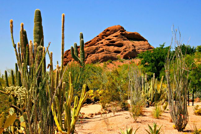 Desert Botanical Gardens at Papago Park in Phoenix. © Rex Vogel, all rights reserved