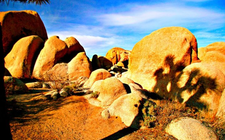 Late afternoon shadows enhance the beauty of Joshua Tree. © Rex Vogel, all rights reserved