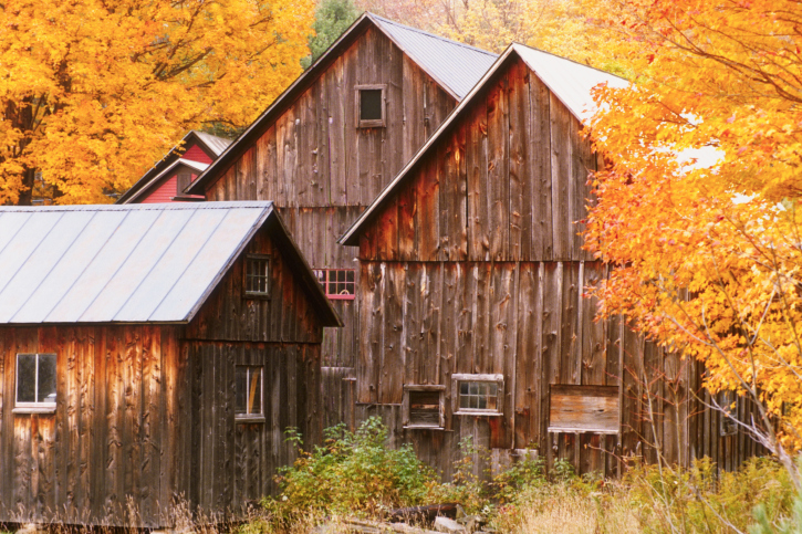Rustic Farm Buildings in Autumn Trees