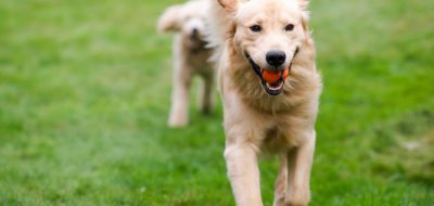 12 pointers for happy pet