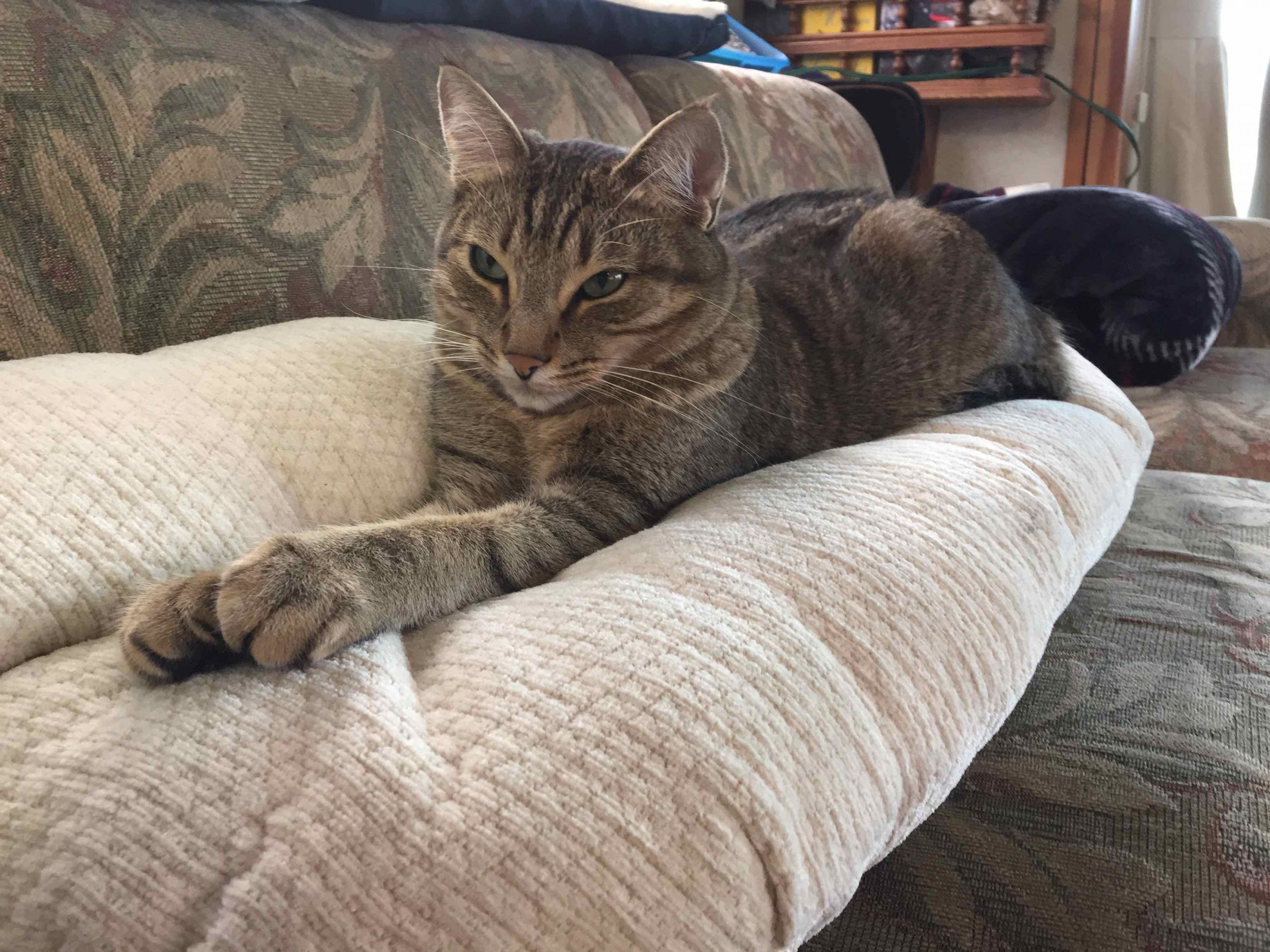 cat lying on couch with paws stretched out