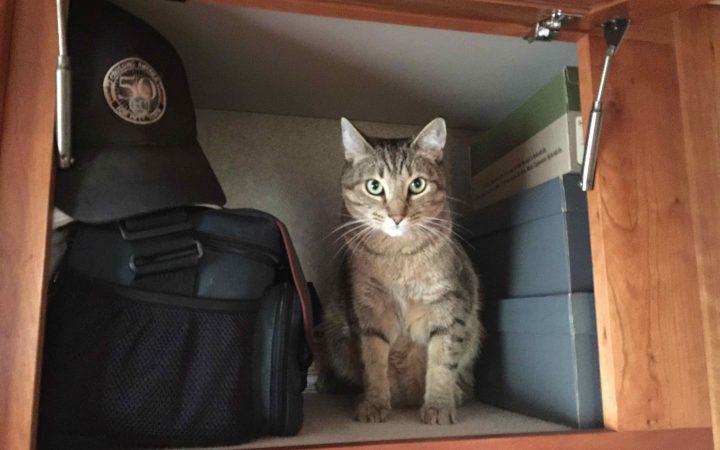 Cat sitting in RV area