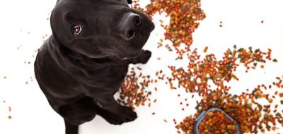 pet proofing your rv
