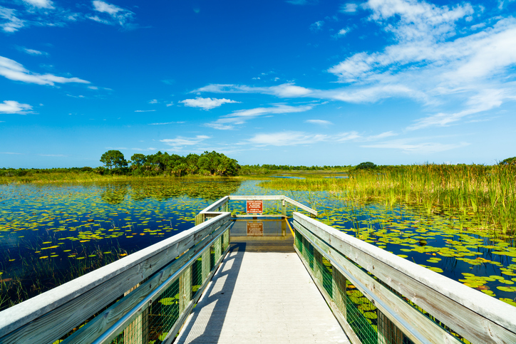 Southern Florida Gulf Coast Boasts Everglades And Spring