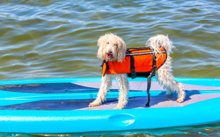 Pet-Friendly RV Tourist Destinations
