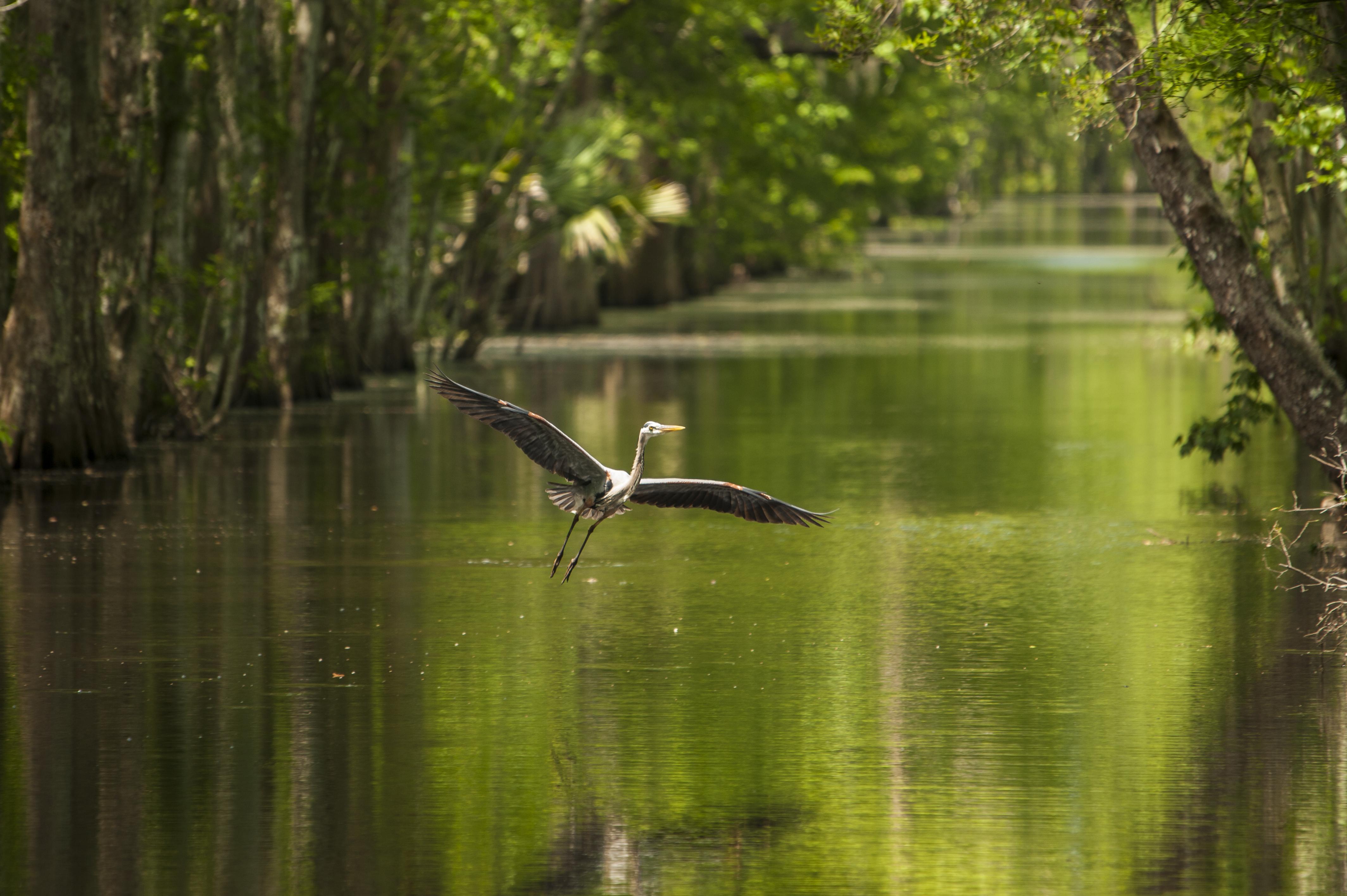 Swamps Houma Louisiana