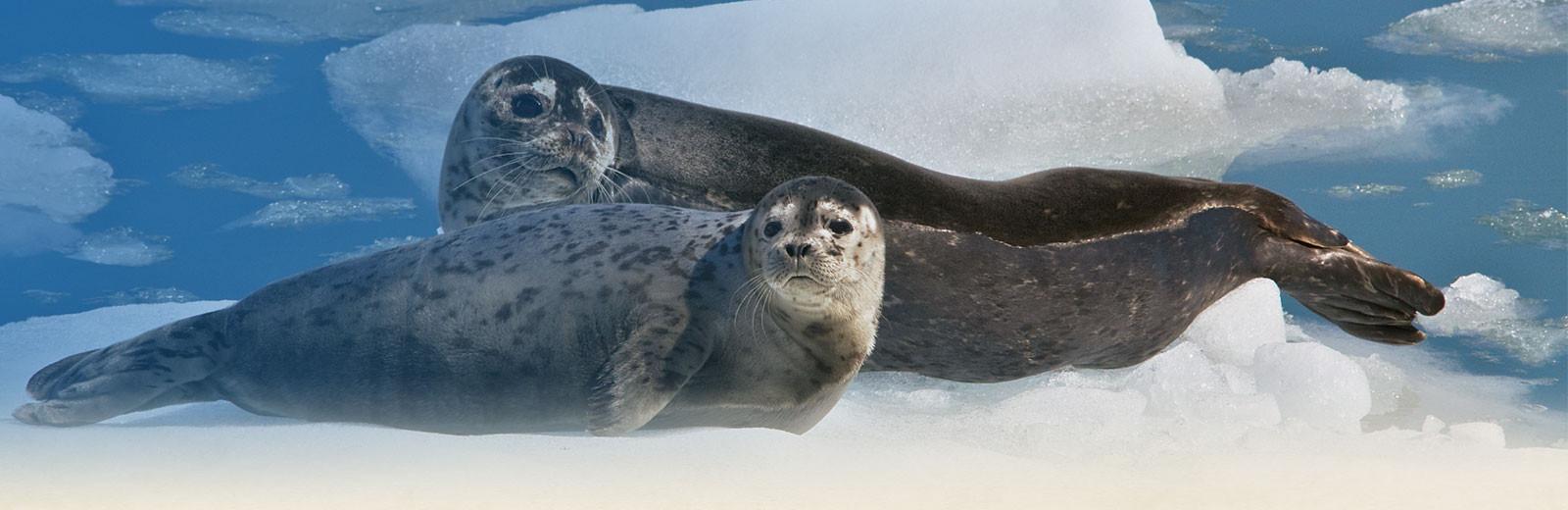 Stan Stephens Cruises - seals