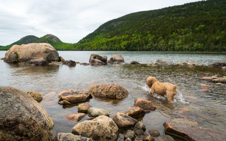 5 dog-friendly eastern national parks