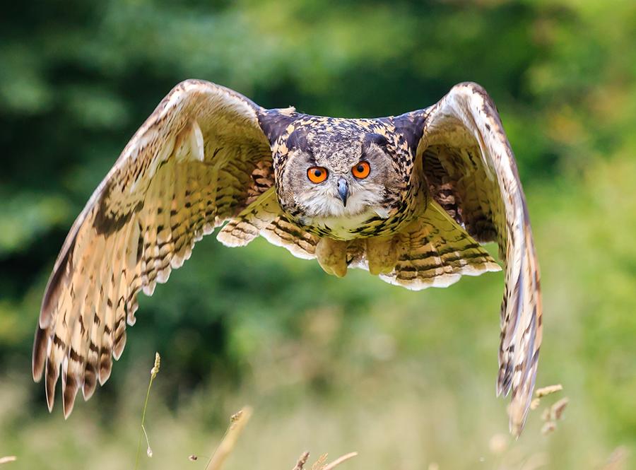 rv owl prowl