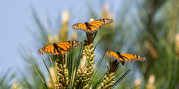 Butterflies perched on plants