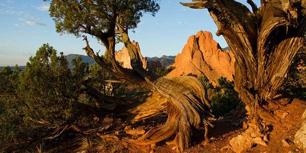 Trees grow amid rocks.