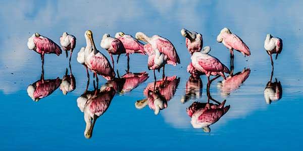 Flamingos on the shore.