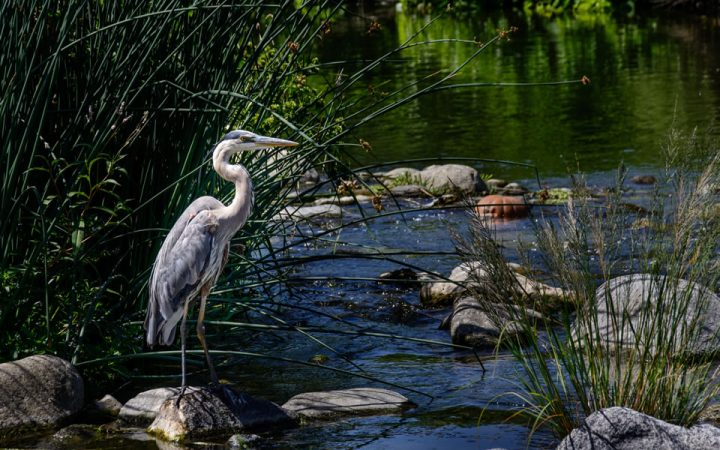 The Glades RV Resort - wildlife, crane