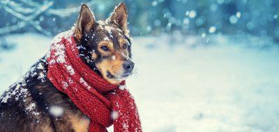 winter rv dog