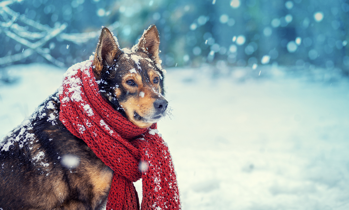 winter rv dog