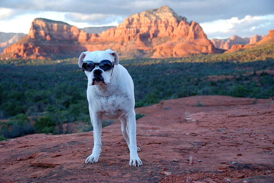 dog friendly southwest rv