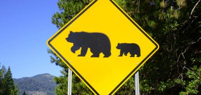 Bear crossing sign on the road