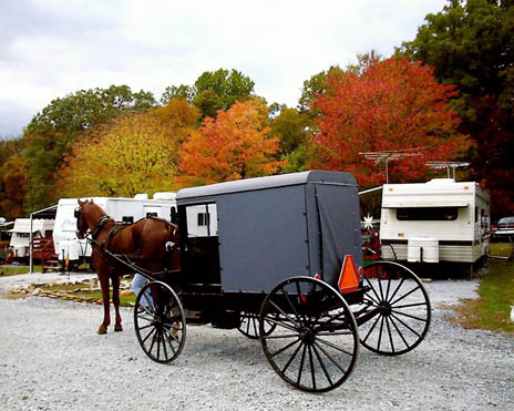 Tucquan Park Family Campground - Amish horse and carriage