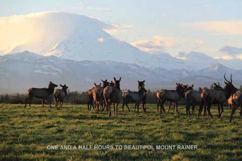 Midway RV Park - horses at Mount Rainer