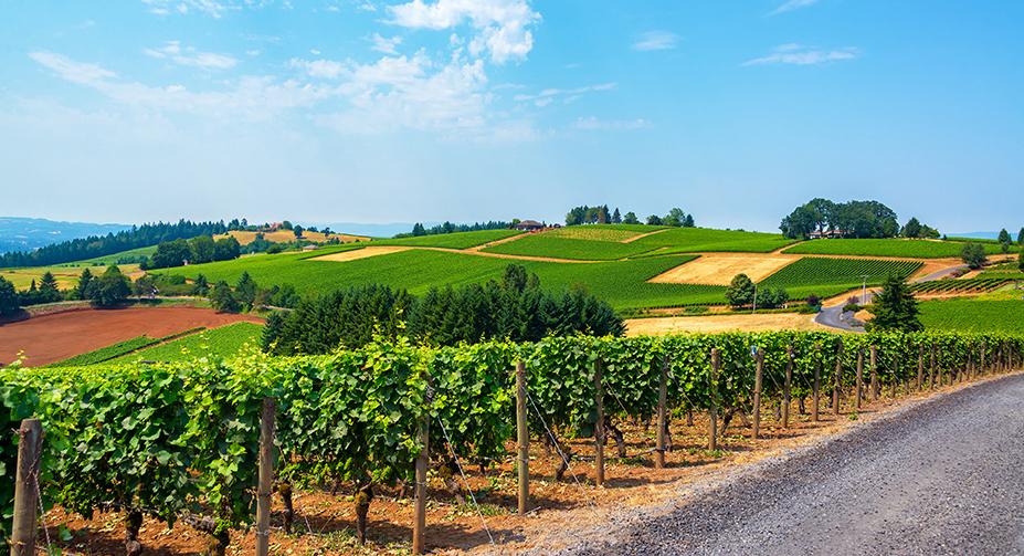 green winding vineyards