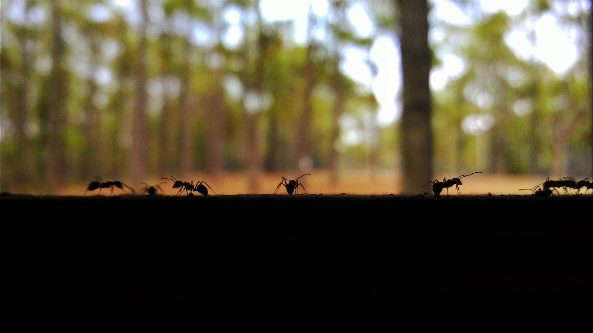 Mark My Words March Keeping Ants Out Of Your Rv