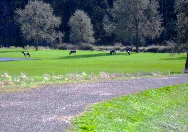Brookhollow RV Park - wildlife on grounds