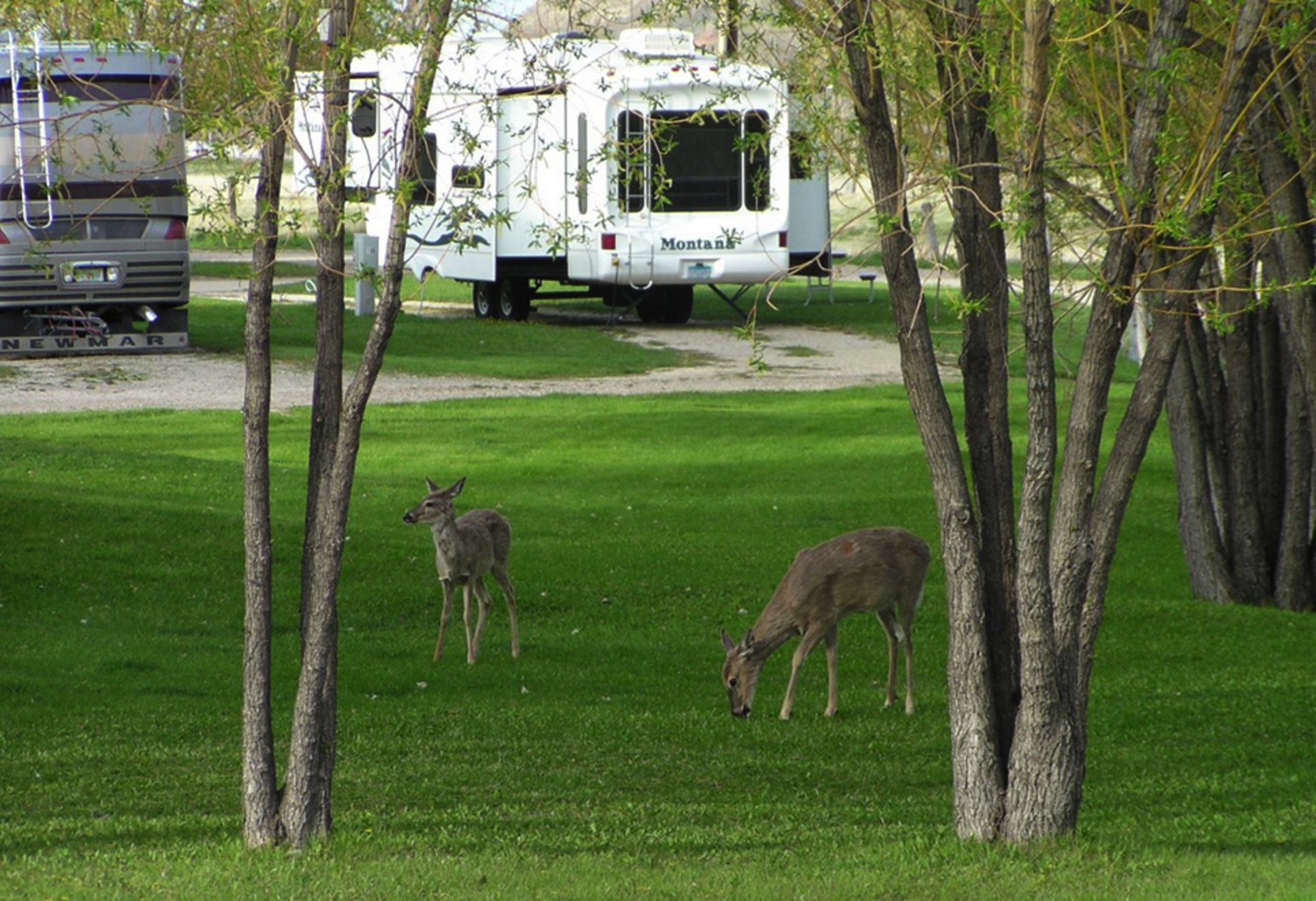 Stay At Deer Park Rv Park For Bighorn Mountains Buffalo Wy