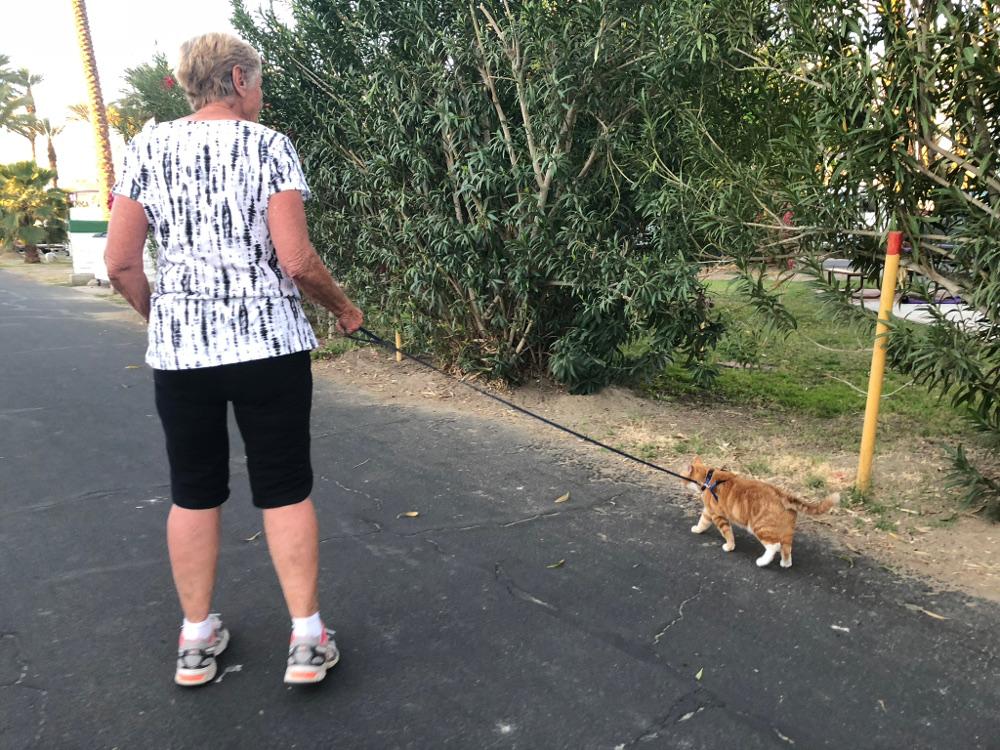 Leash walk your camping cat