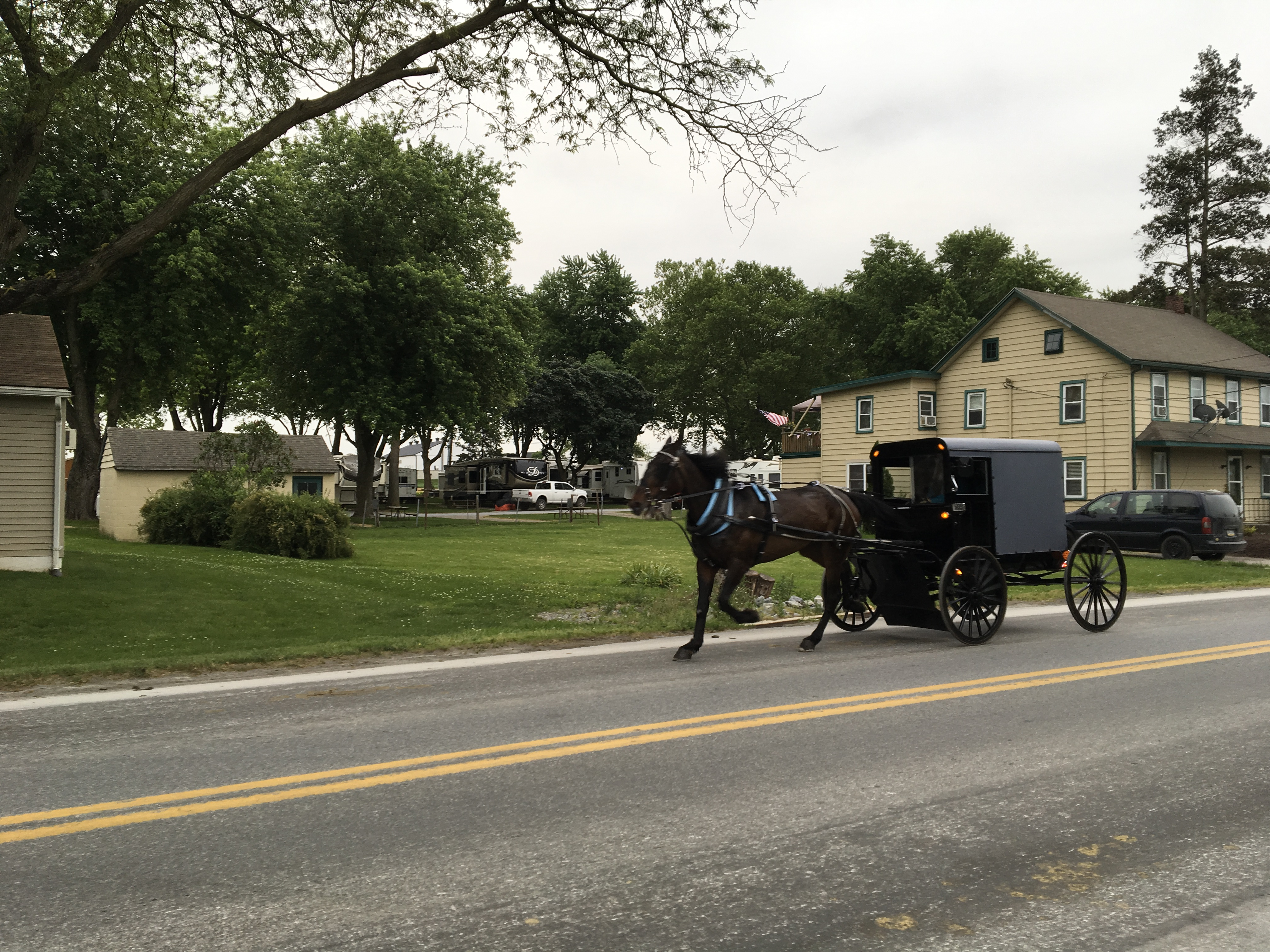 Flory's Cottages & Camping - buggy ride
