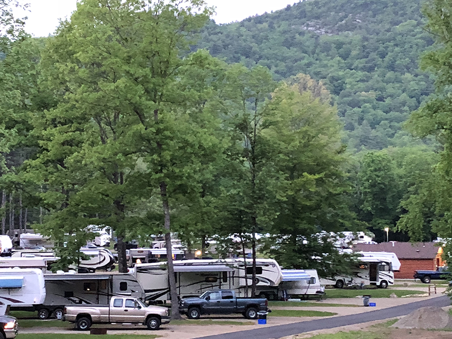 RVs and trucks parked at campground with tall green trees