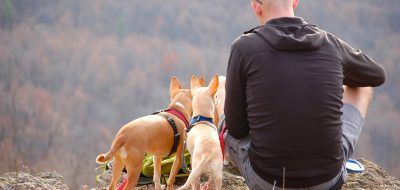 Back of man sitting at mountain ledge with two small dogs