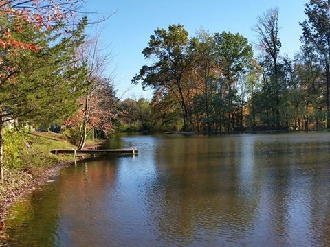Shady Grove Campground - lake