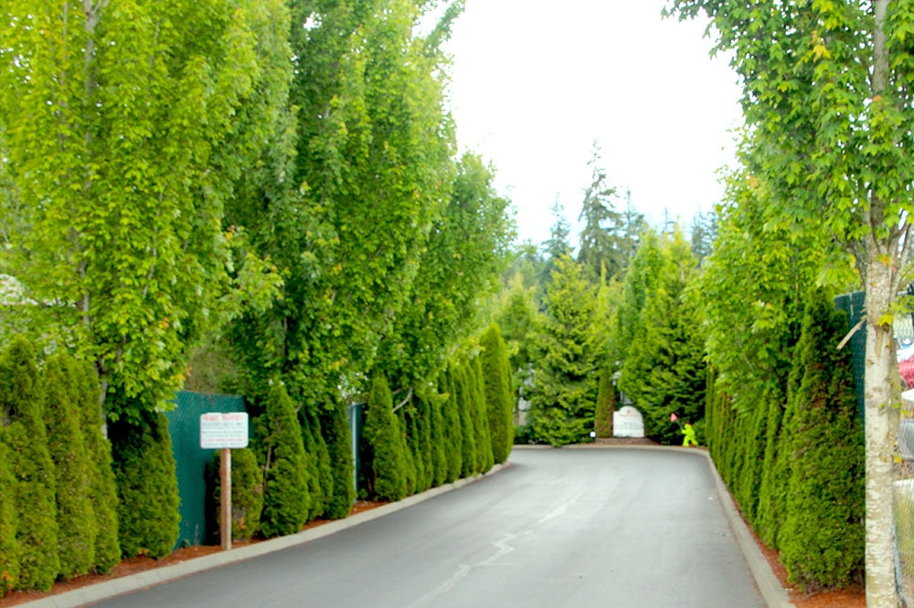 Maple Grove RV Resort - tree-lined entry way
